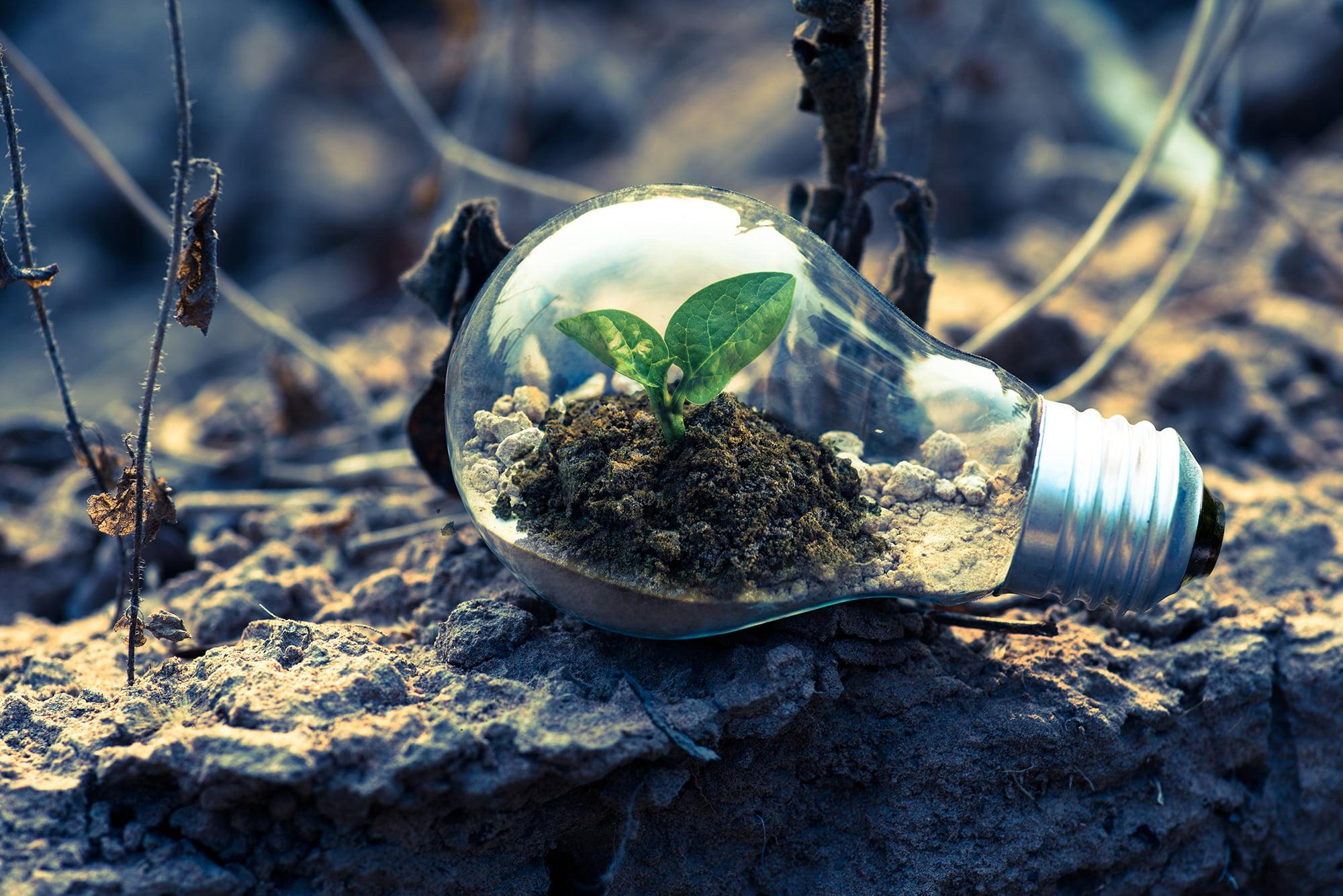 TRANESOL Sapiens proyectos agro-fotovoltaicos-TRANESOL02