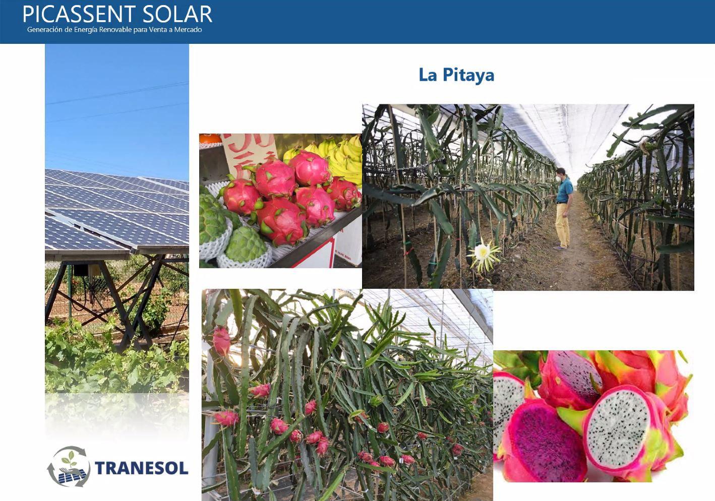 Comunidades Energéticas Renovables Agro-fotovoltaicas-02