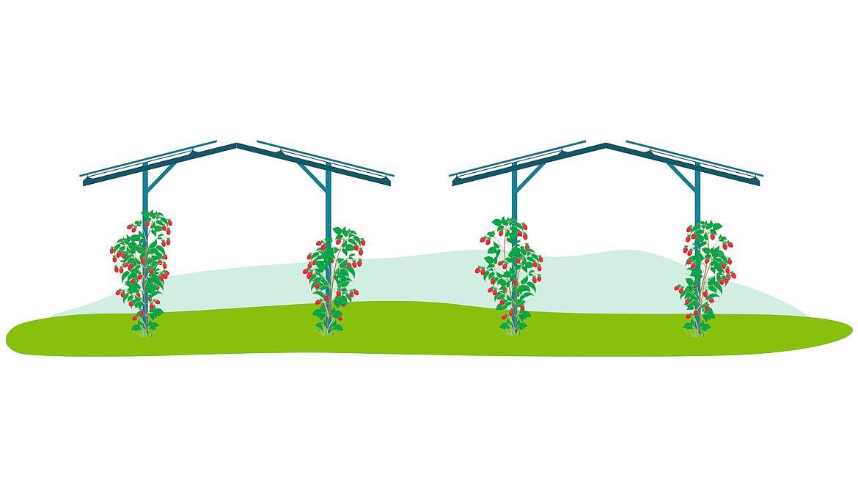 Proyecto Agrovoltaico Fruitvoltaic AWARD-02